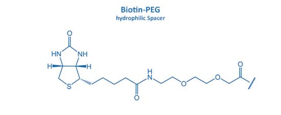 Biotin-PEG