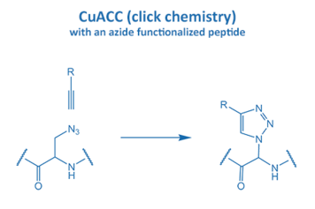 CuACC with an azide functionalized peptide