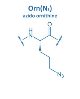 azido ornithine