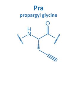 propargyl glycine