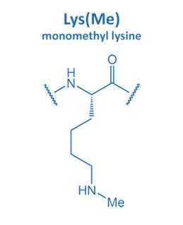 monomethyl lysine