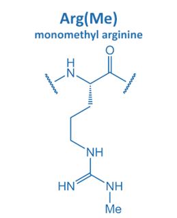 monomethyl arginine