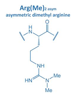 asym. dimethyl arginine