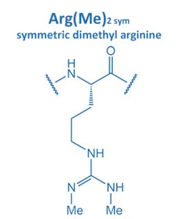sym. dimethyl arginine
