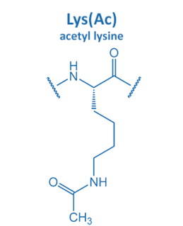 acetyl lysine