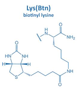 biotinyl lysine