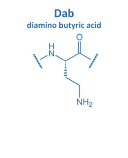 diamino butyric acid