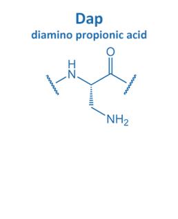 diamino propionic acid