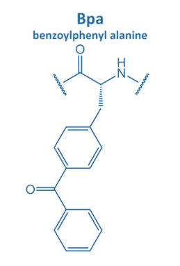 benzoylphenyl alanine
