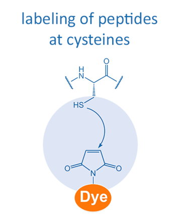 labeling of peptides at cysteines