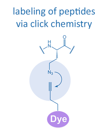 labeling of peptides via click chemistry