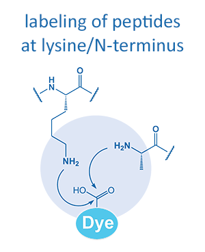 labeling of peptides at lysine/N-terminus