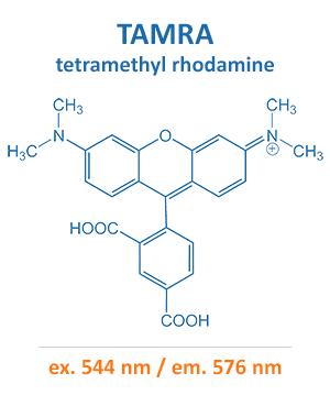 tetramethyl rhodamine