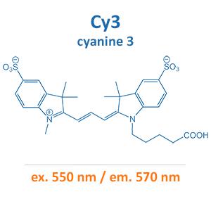 cyanine 3