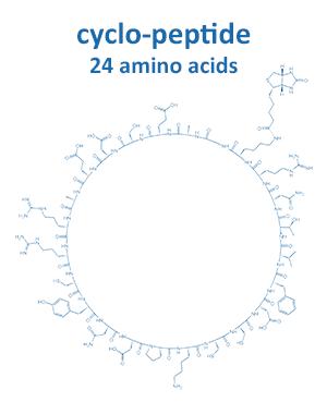 cyclo-peptide 24 amino acids