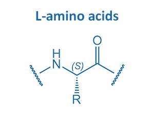 L-amino acids