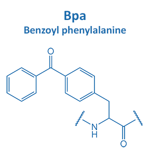 Benzoyl phenylalanine
