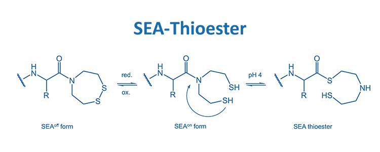 SEA-Thioester