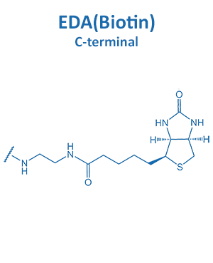 EDA(Biotin)