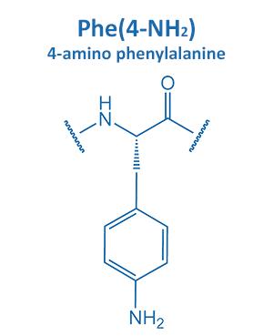 4-amino phenylalanine