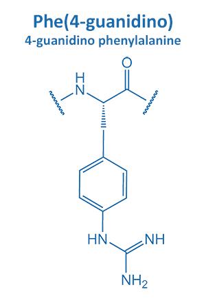 4-guanidino phenylalanine