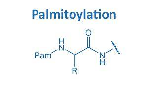 Palmitoylation