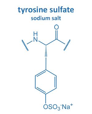 tyrosine sulfate