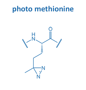 photo methionine