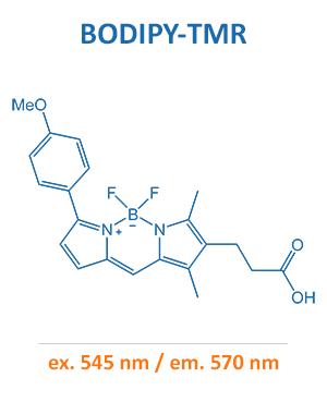 BODIPY-TMR